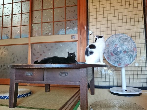 猫カフェめおまるけの和室にいた食後の猫たちの写真