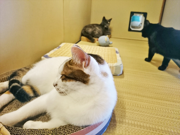 猫カフェめおまるけの和室にある押し入れの中の猫たちの写真