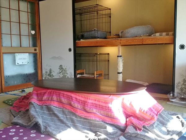 猫カフェめおまるけの和室にあったこたつの写真