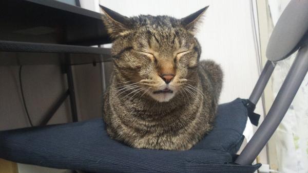 香箱座りする猫の写真1