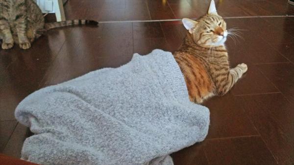 スフィンクス座りする猫の写真2