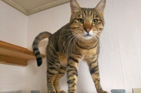しっぽがハテナになっている猫の写真4