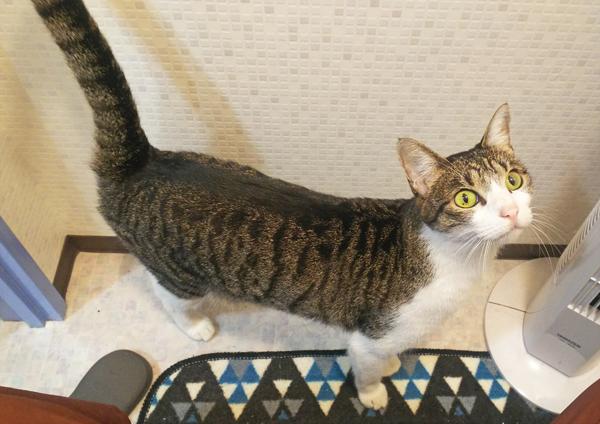 しっぽがピンとたっている猫の写真7