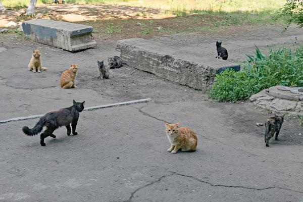 猫集会の写真