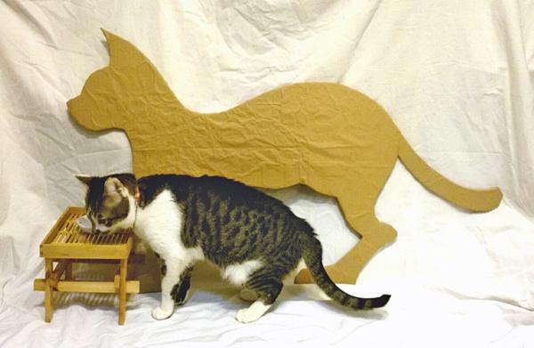 長い猫のサイズがわかる比較写真