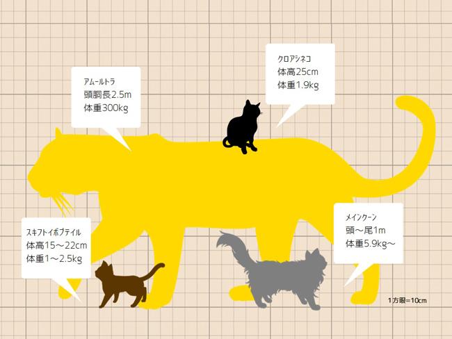 古い猫科の動物のサイズがわかるイラスト