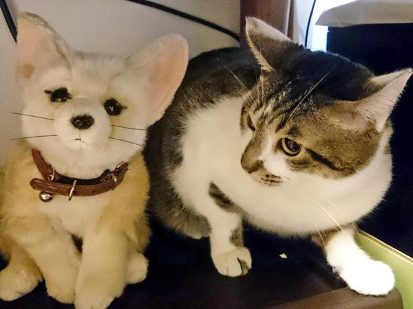 小さい猫のサイズがわかる比較写真