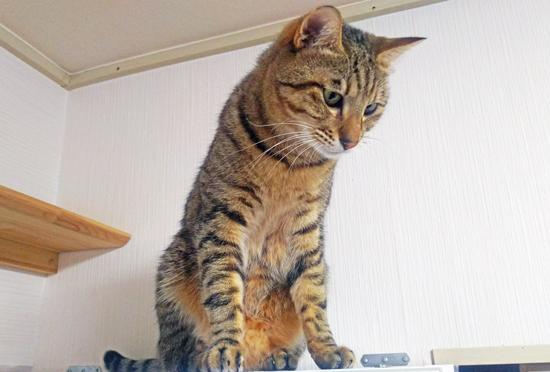 猫の写真2